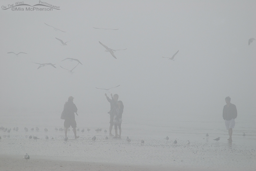 People feeding gulls in a fog