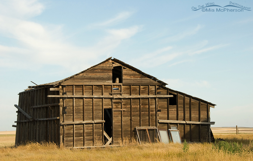 Old Granary in Glacier County
