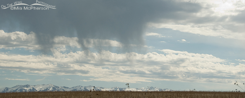 Virga over the Great Salt Lake and the Wasatch Mountains