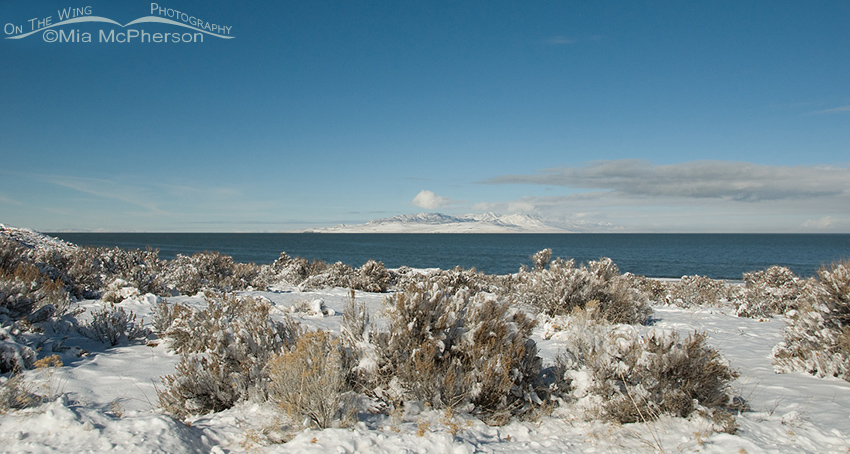 View of snow-covered Promontory Point from Egg Island Overlook
