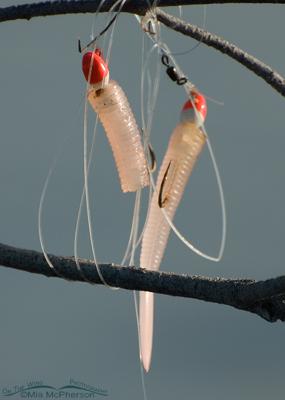 Fishing Lures left on a snag in a tidal lagoon