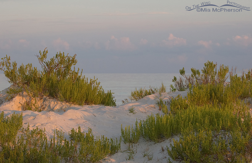 Sand Dune at Fort De Soto in early morning light