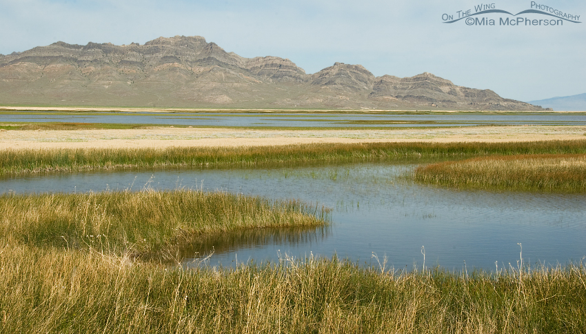 I can't get enough of Fish Springs NWR