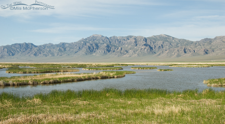 The marshes at Fish Springs are so beautiful