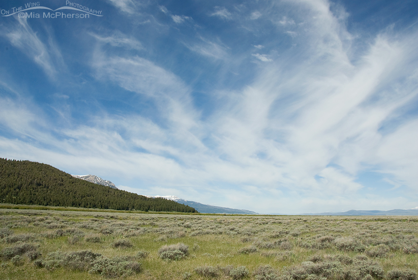 June skies over the Centennial Valley