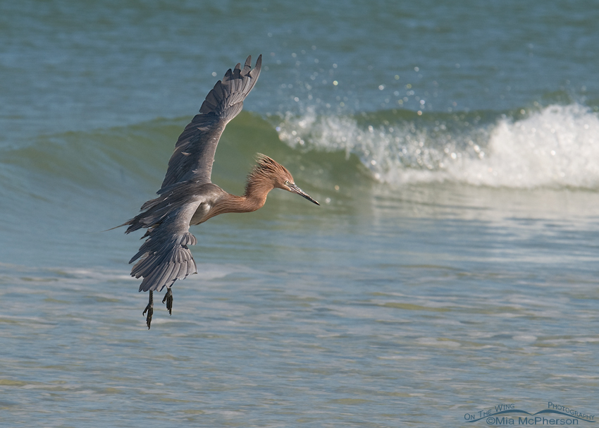 Reddish Egret Cleared For Landing Mia Mcpherson 39 S On The