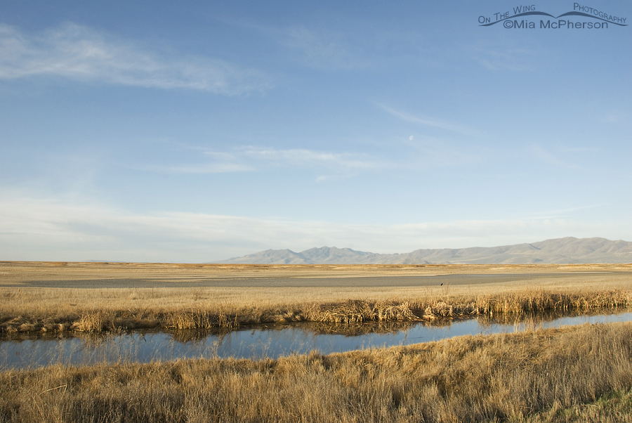 Bear River National Wildlife Refuge, Utah