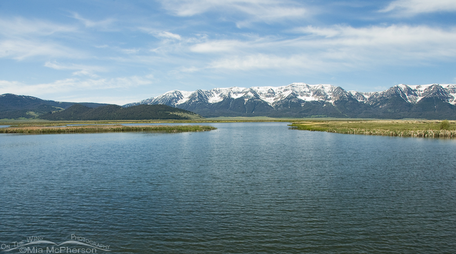 View of the Centennial Mountains from Wigeon Pond