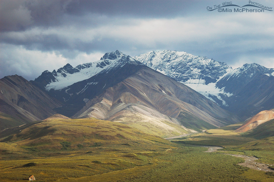 Denali National Park - Polychrome Pass