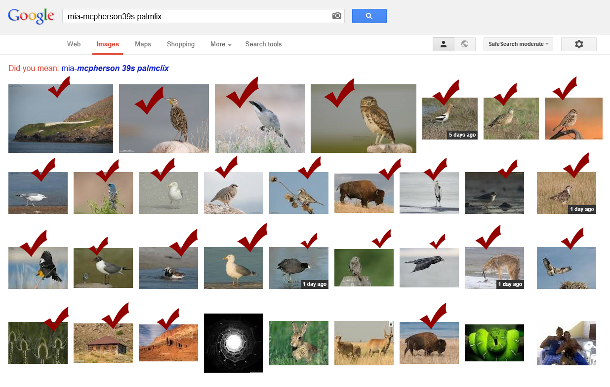 google-search-palmlix-mia-mcpherson39s[1]