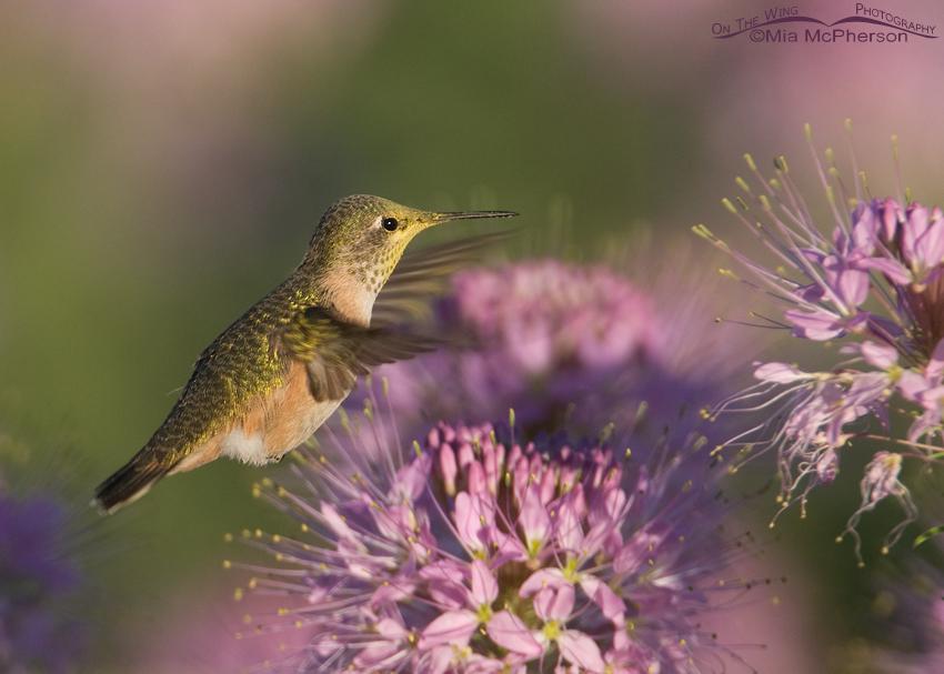 Morning Light and Hummingbirds