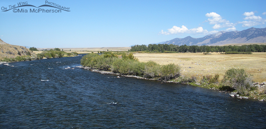 The Madison River, Madison County, Montana