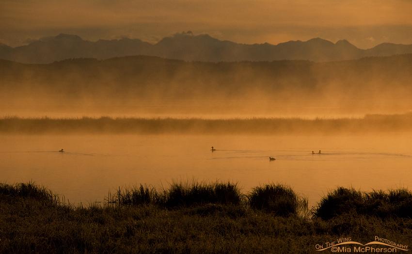 Golden morning mist