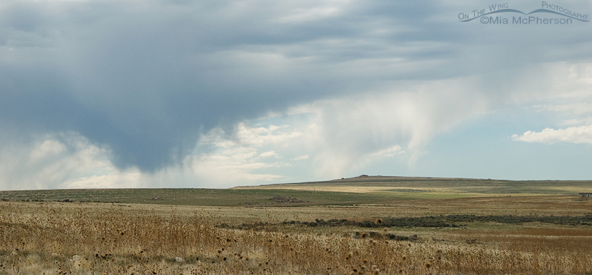 More virga from near the Visitor Center