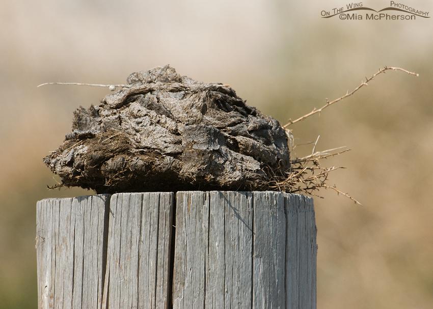 Bison Poop on a Post