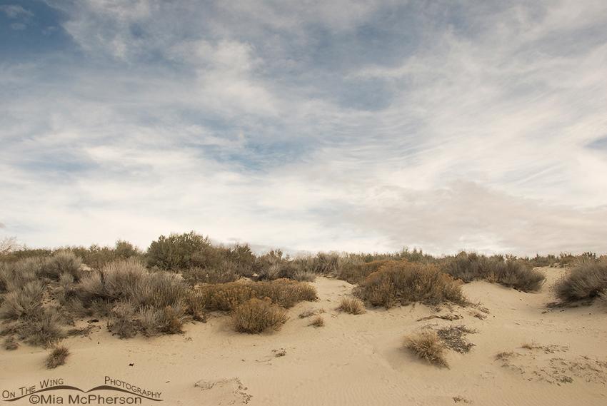 Sand Dunes on Antelope Island State Park, Utah