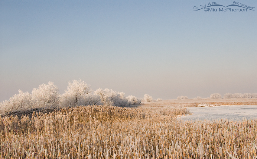 Frosted Farmington Bay WMA