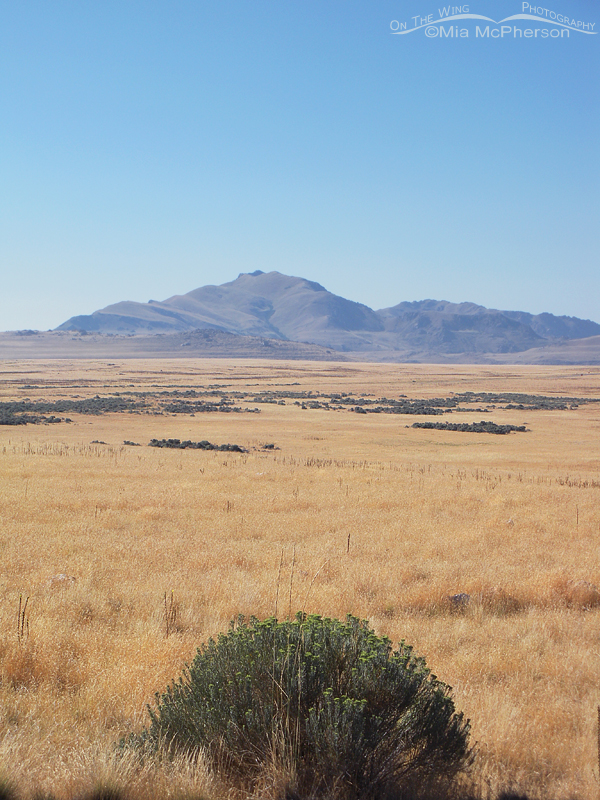 View of Frary Peak across the grassy plain