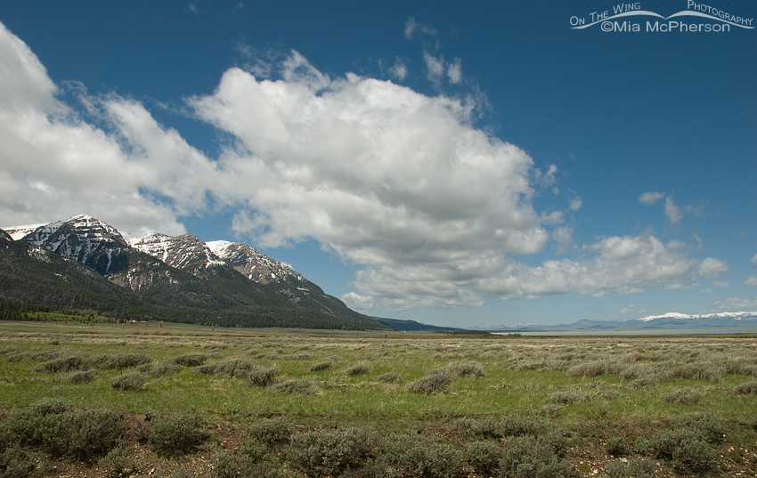 Centennial Mountains with blue skies and fluffy clouds