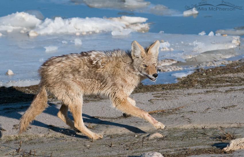 Coyote braking to turn around