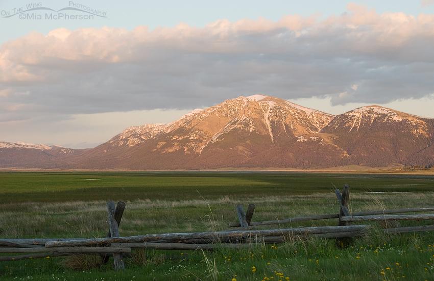 Evening light on the Centennial Mountains
