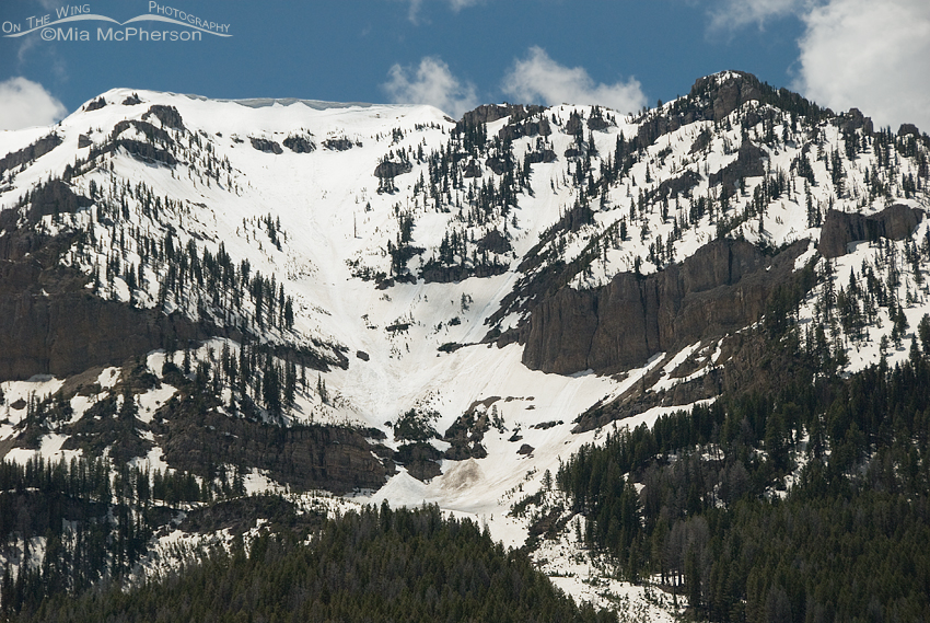 Lots of snow left on the Centennial Mountains, even for June