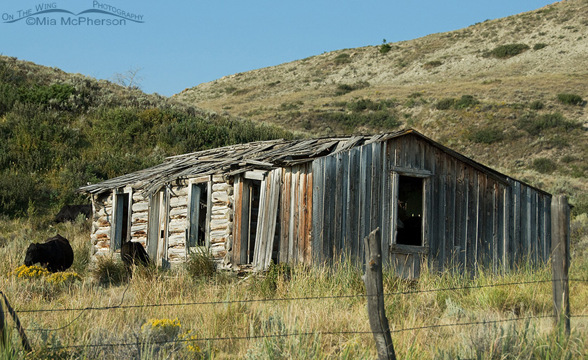 An old house in the Centennial Valley of Montana