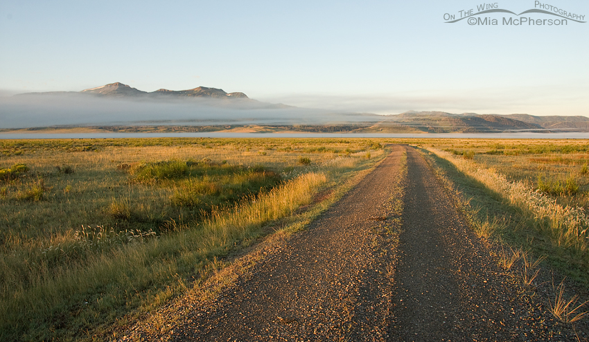 Early morning fog at Red Rock Lakes National Wildlife Refuge