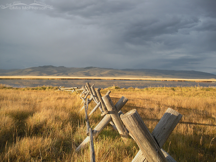Sunlit fence at the lower campground of Red Rock Lakes NWR