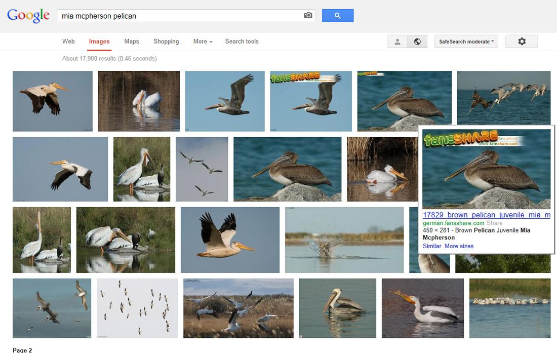 search-pelican-google1