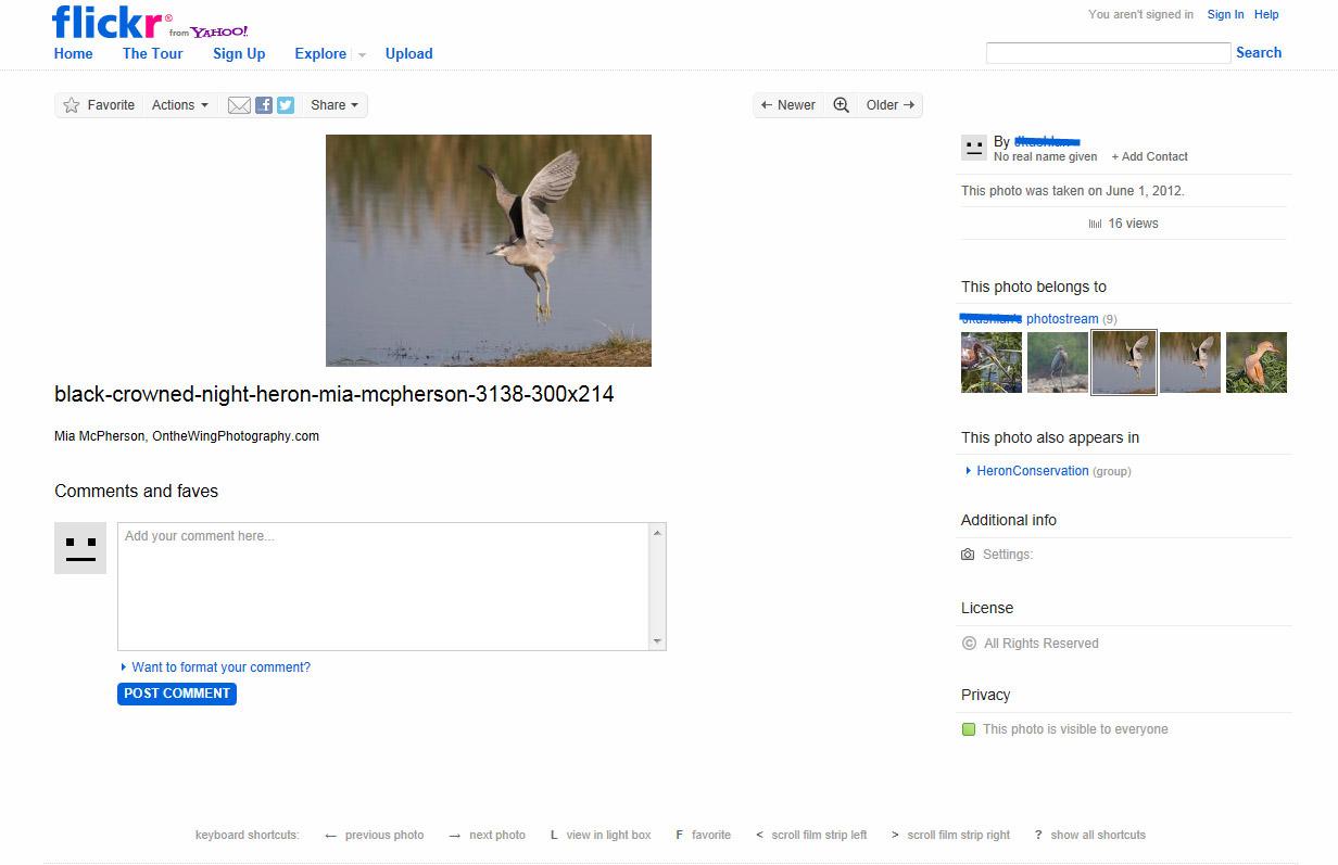 stolen-black-crowned-night-heron2