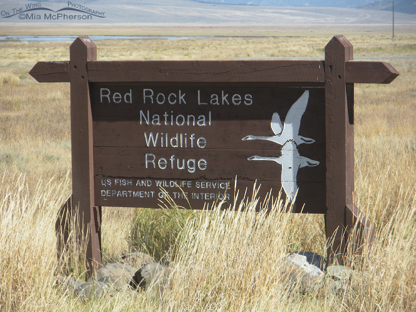 Welcome to Red Rock Lakes National Wildlife Refuge