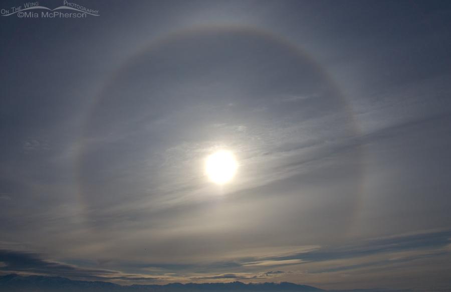 Sun Dog in the sky