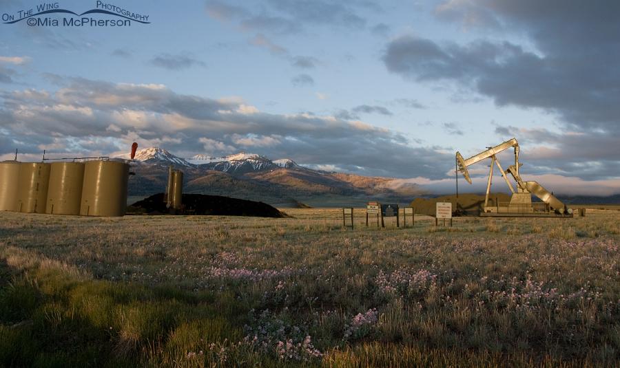 Montana Natural Gas Companies