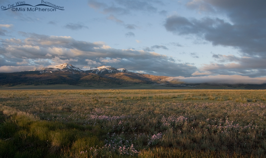 Centennial Mountain View from Red Rock Lakes National Wildlife Refuge, Montana