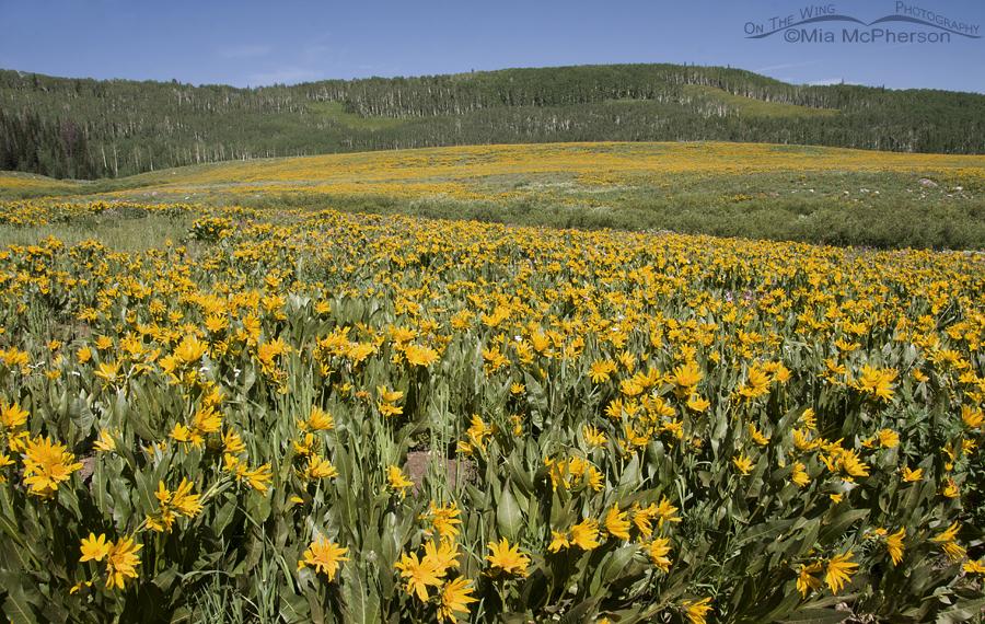Mule's Ears -Soapstone Basin, Utah