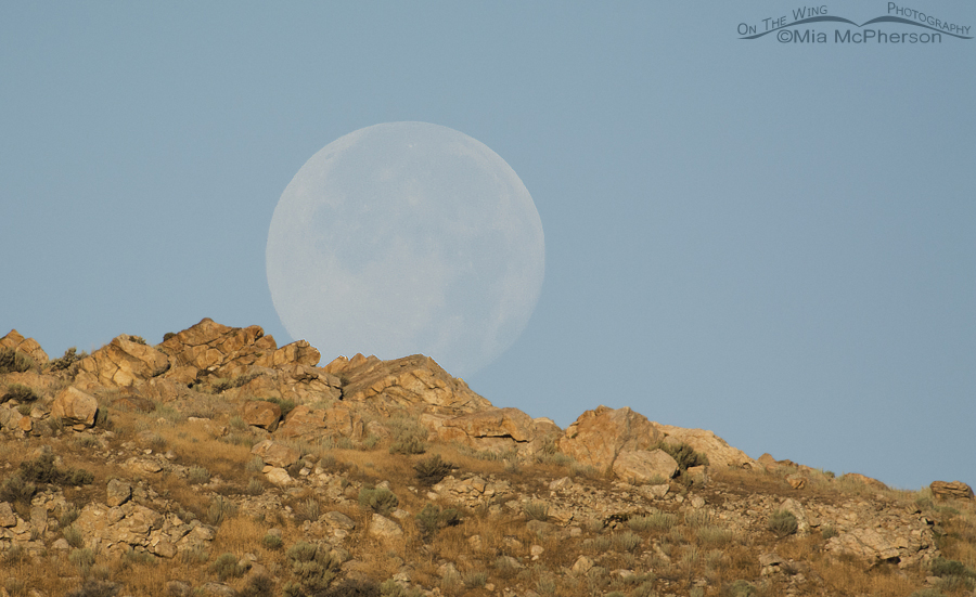 Super Moon - July 13, 2014