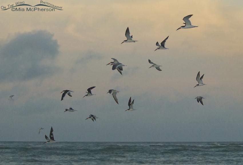 Sunrise Skimmers